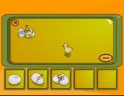Hatching Chick