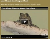 All About Frogs And Toads