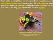 All About Reptiles And Amphibians