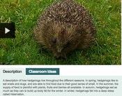 Hedgehogs Through The Seasons