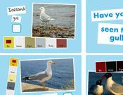 Identify British Seagulls