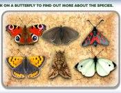 U.K. Butterflies